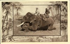 Elephant with Handlers
